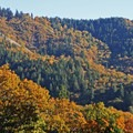 Views of fall foliage near the trailhead.- Grizzly Peak