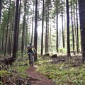 Riding through a younger stand of timber.- Carpenter Bypass Trail System, Whypass Trail
