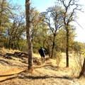 Mountain biking on the Salmon Falls and Darrington Trail.- Darrington (Salmon Falls) Trail