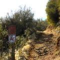 The trail near the Folsom Lake State Recreation Area Parking lot- Darrington (Salmon Falls) Trail