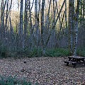 Sites are spacious at Belknap Campground.- Belknap Hot Springs Campground