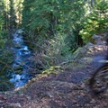The technical section below Tamolich Pool is on a lava rock shelf above the river.- McKenzie River Trail