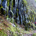Cold fall weather keeps the trail firm and grippy.- McKenzie River Trail