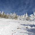 Pines buffeted with winter weather on Tumalo Mountain's steep flank.- Tumalo Mountain Snowshoe