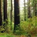 Hiking along the Ben Johnson Trail.- Muir Woods via Deer Park Fire Road