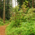 Ben Johnson Hiking Trail.- Muir Woods National Monument