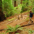 Muir Woods' Ben Johnson Hiking Trail.- Muir Woods National Monument