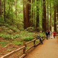 Muir Woods National Monument along the Main Trail.- Muir Woods National Monument