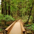 Muir Woods National Monument.- Muir Woods National Monument