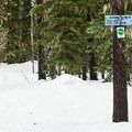 The Meadows Creek junction.- Pocket Creek