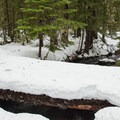 A log bridge across the East Fork of the Hood River.- Pocket Creek