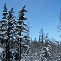 A blue sky contrasted against he dark pine and pure white snow.- Cooper Spur Shelter via Tilly Jane Trail