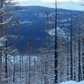 An early morning view through the trees along the Tilly Jane Trail.- Cooper Spur Shelter via Tilly Jane Trail