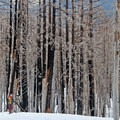 A snowshoer's colorful attire is juxtaposed against the backdrop as she descends back through the Gnarl Ridge Fire.- Cooper Spur Shelter via Tilly Jane Trail