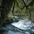 Oneonta Gorge in Winter.- Oneonta Gorge