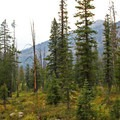 Lush green forest clearings provide excellent habitat for wildlife in the area.- Washington Lake