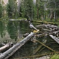 A collection of downed tree trunks at the south end of the lake.- Washington Lake