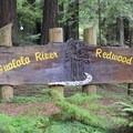 Entrance to Gualala River Redwood Park.- Gualala River Redwood Park
