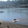 Dogs playing in the water at the Sellwood Riverfront Park- Sellwood Riverfront Park