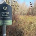 A habitat study area at Oaks Bottom Wildlife Refuge.- Oaks Bottom Wildlife Refuge