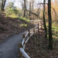 The trail system at Oaks Bottom Wildlife Refuge.- Oaks Bottom Wildlife Refuge
