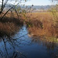 Healthy wetlands at Oaks Bottom Wildlife Refuge.- Oaks Bottom Wildlife Refuge