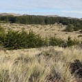 The Bodega Dunes landscape.- Bodega Dunes Campground