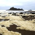 Rock formations and sea foam at Forgarty Creek.- Fogarty Creek State Recreation Site