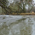 An icy inlet in Scappoose Bay.- Scappoose Bay