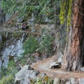 The Four Mile Trail.- Four Mile Trail to Glacier Point