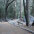 The Lower Yosemite Falls Trail makes its way through interior live oak, incense cedar and ponderosa pine before opening up at the viewing platform overlooking the falls.- Lower Yosemite Falls
