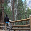 Quick glimpse of Upper Yosemite Falls from the bike path.- Yosemite Valley Bicycle Loop