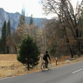 Riding alongside Leidig Meadow.- Yosemite Valley Bicycle Loop