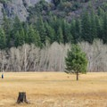 Leidig Meadow as seen from Northside Drive.- Yosemite Valley Bicycle Loop