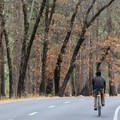 Fall colors along Northside Drive.- Yosemite Valley Bicycle Loop
