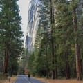 El Captian towering above the trees along Northside Drive.- Yosemite Valley Bicycle Loop