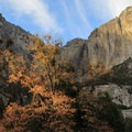 Fall colors below Upper Yosemite Falls.- Yosemite Valley Bicycle Loop