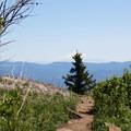 Mount Shasta (14,179') in a hazy distance.- Grizzly Peak