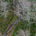 View from a trestle bridge on the Upper Salmonberry River Trail.- Upper Salmonberry River Trail