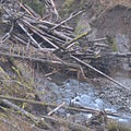 A logjam alludes to the heavy precipitation the area receives.- Upper Salmonberry River Trail
