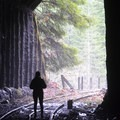 Inside a railway tunnel on the Upper Salmonberry River Trail.- Upper Salmonberry River Trail