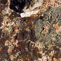 Lichen-filled rock on the Pike Creek Mine Hike.- Pike Creek Mine Hike