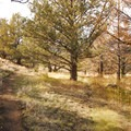 Page Springs Campground's 1.1-mile nature trail.- Page Springs Campground