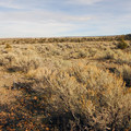 Sagelands adjacent to campground.- Steens Mountain Wilderness Resort Campground