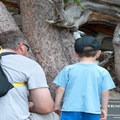 The Bristlecone Pine Trail is a great option for families.- Bristlecone Pine Trail
