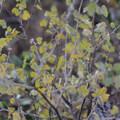 Unidentified species (help us identify it by providing feedback).- Green Ridge Lookout