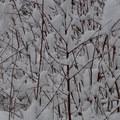 Snowy willows surrounding Fish Lake.- Fish Lake Remount Depot