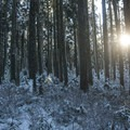 Sunrise through the forest en route to McNeil Point.- Mount Hood, Sandy Glacier Ice Caves