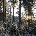 Sunset through the forest just above the Top Spur Trailhead.- Mount Hood: Sandy Glacier Ice Caves