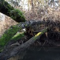 Fallen logs span the channel in a number of places.- Fern Ridge Wildlife Area, Applegate Unit